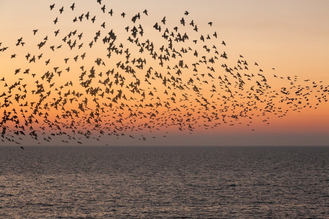 Blackpool Starling Murmuration Sunset - Photography By Blackpool Photographer Yannick Dixon