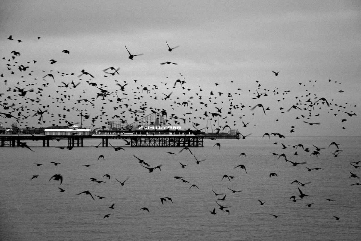 Starlings Above #2 By Yannick Dixon Photographic Works