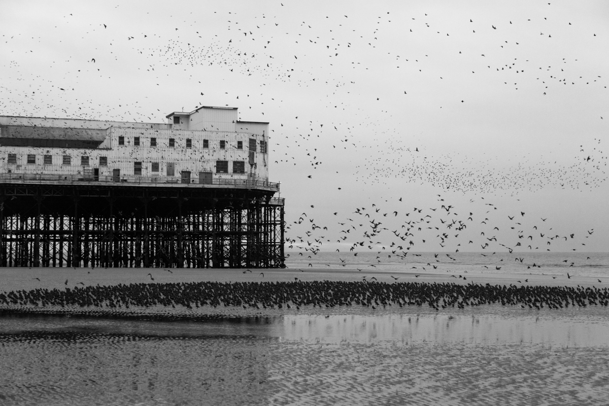Starlings Above #7 By Yannick Dixon Photographic Works