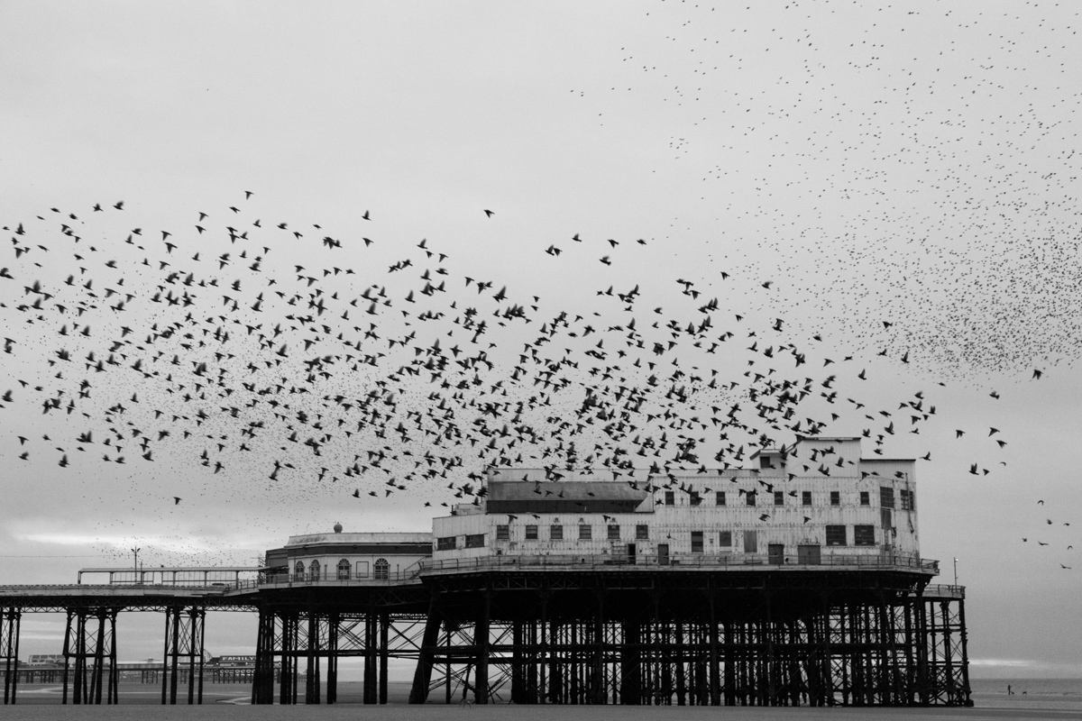 Starlings Above #8 By Yannick Dixon Photographic Works