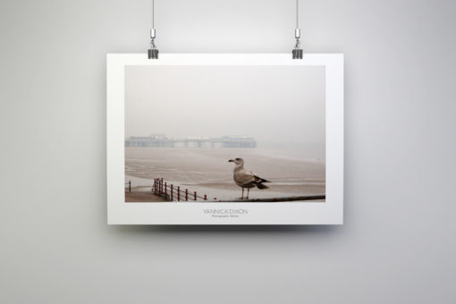 Blackpool Seagull Photographic Print By Yannick Dixon