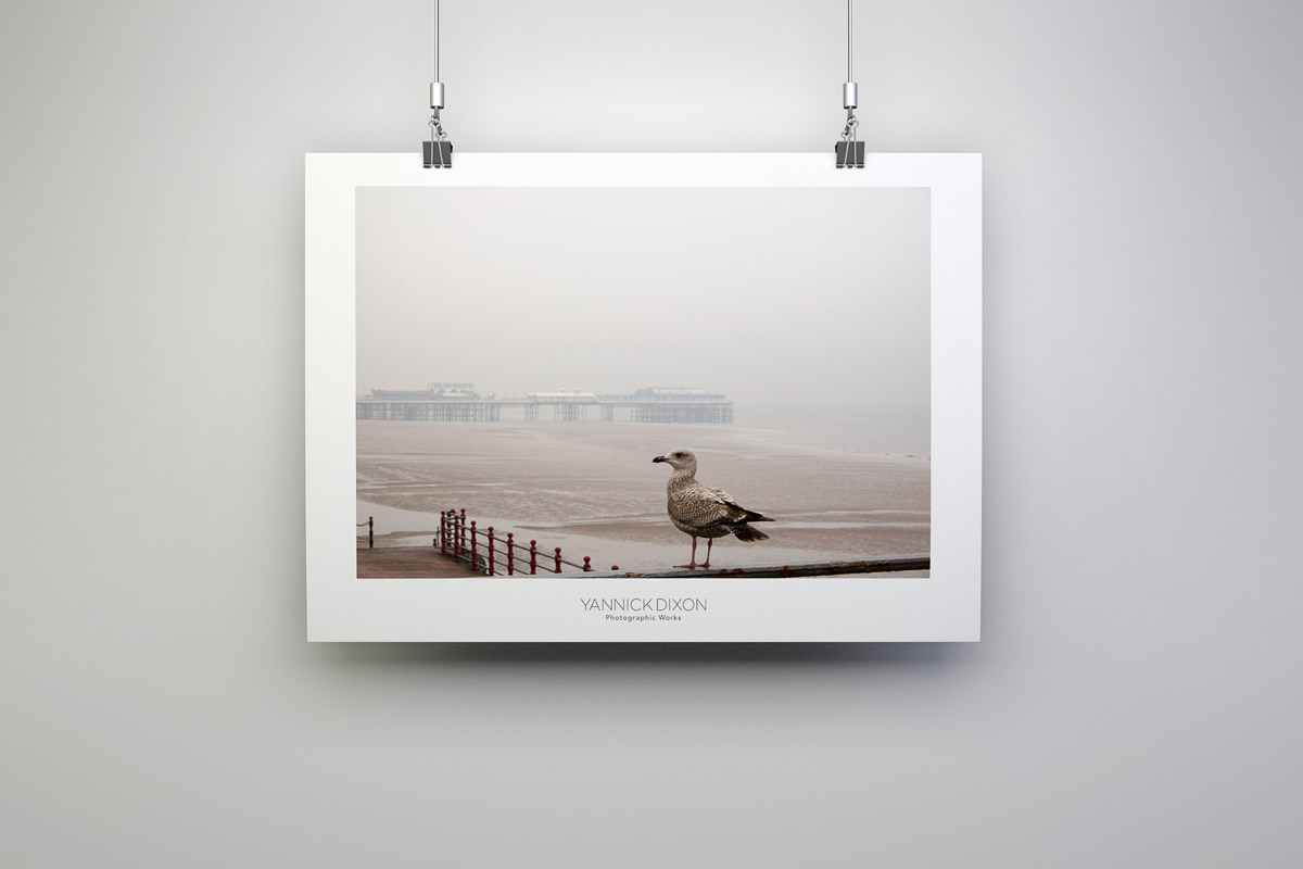 Blackpool Seagull Photographic Print
