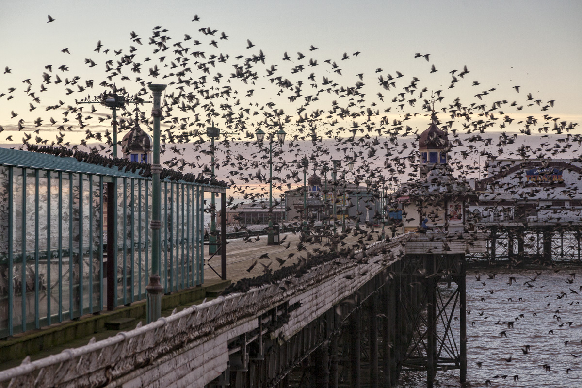 Starlings Murmuration In Blackpool - Photography Review of 2014
