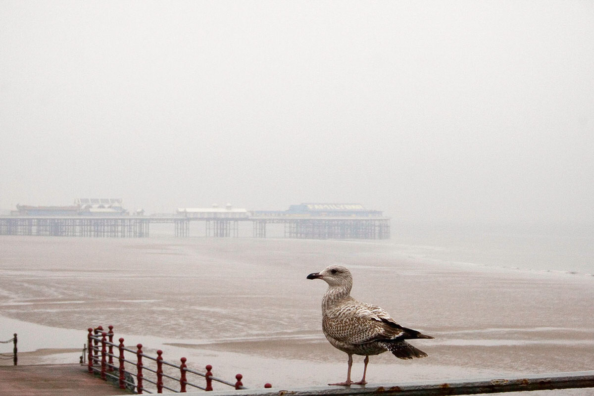 Blackpool Seagull - Blackpool Photography By Yannick Dixon