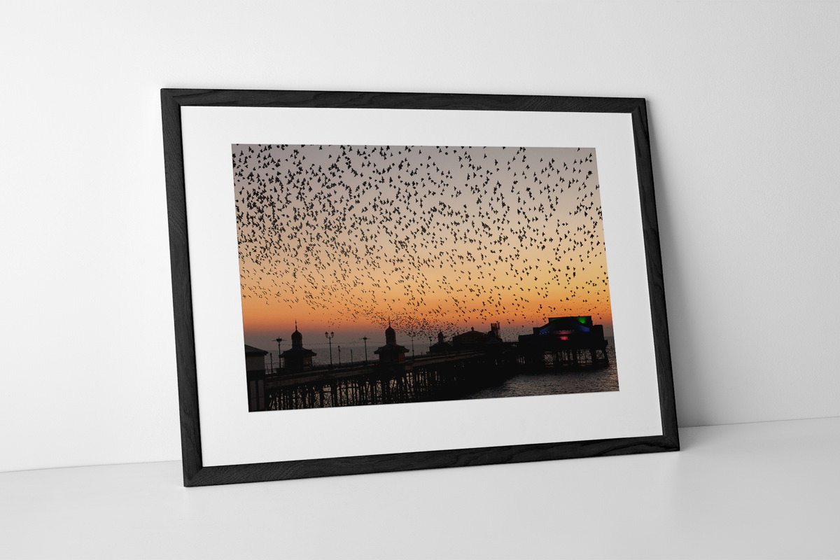 North Pier Starlings Photographic Print In Black Frame By Yannick Dixon