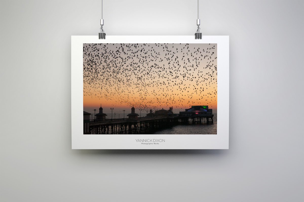 North Pier Starlings Photographic Print