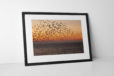 Sunset Starlings Photographic Print In Black Frame