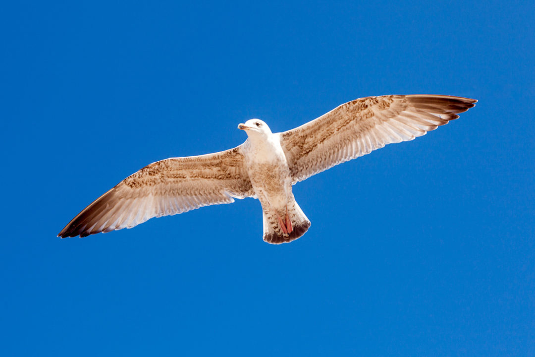 Fly Like A Seagull Photographic Print By Yannick Dixon