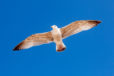 Fly Like A Seagull Photographic Print