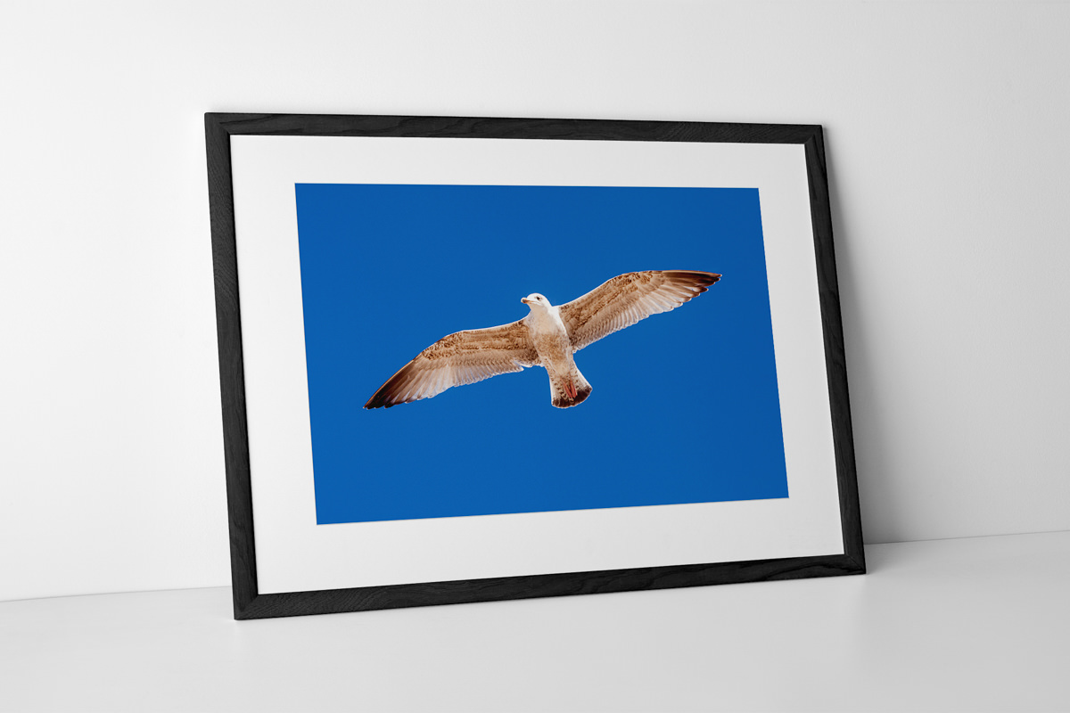 Fly Like A Seagull Photographic Print In Black Frame By Yannick Dixon
