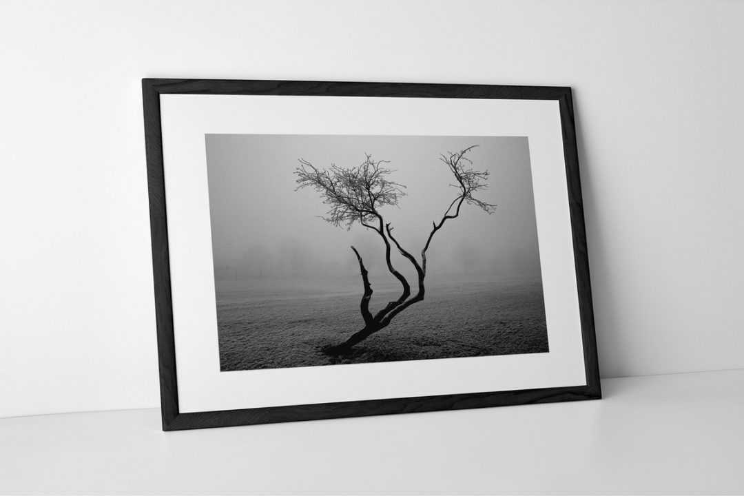 Frozen Tree Photographic Print In Black Frame By Yannick Dixon