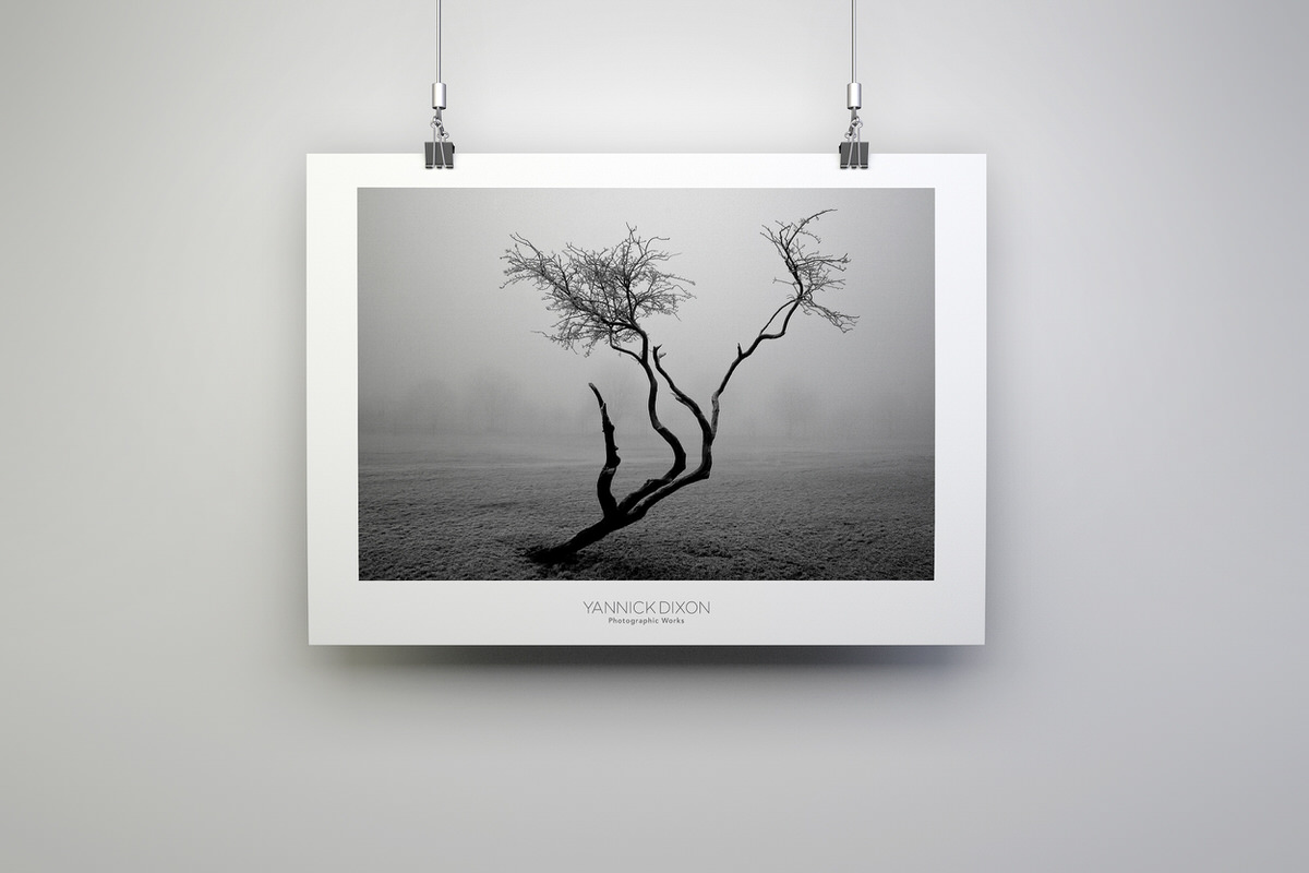 Frozen Tree Photographic Print By Yannick Dixon