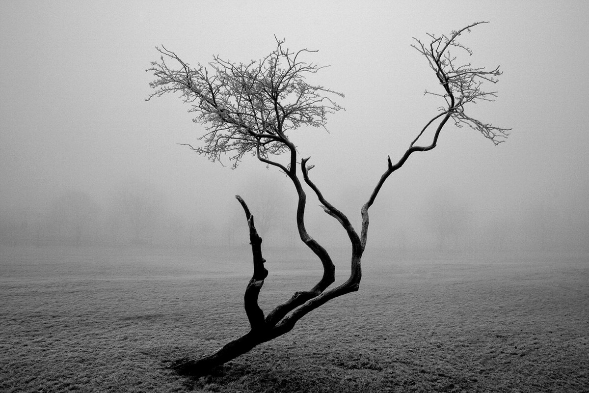 Frozen Tree Photographic Print By Yannick Dixon