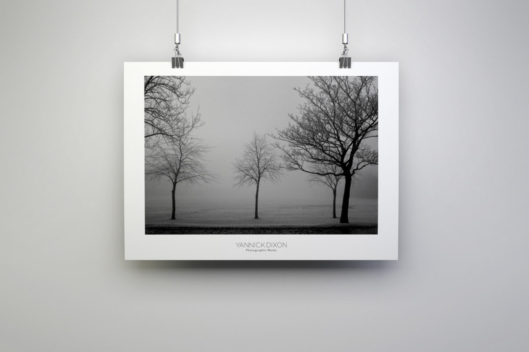 Never Forget Your Roots Photographic Print By Yannick Dixon