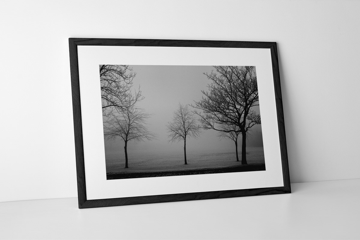 Never Forget Your Roots Photographic Print In Black Frame By Yannick Dixon