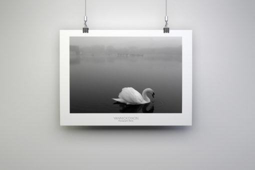 Swan Photographic Print By Yannick Dixon