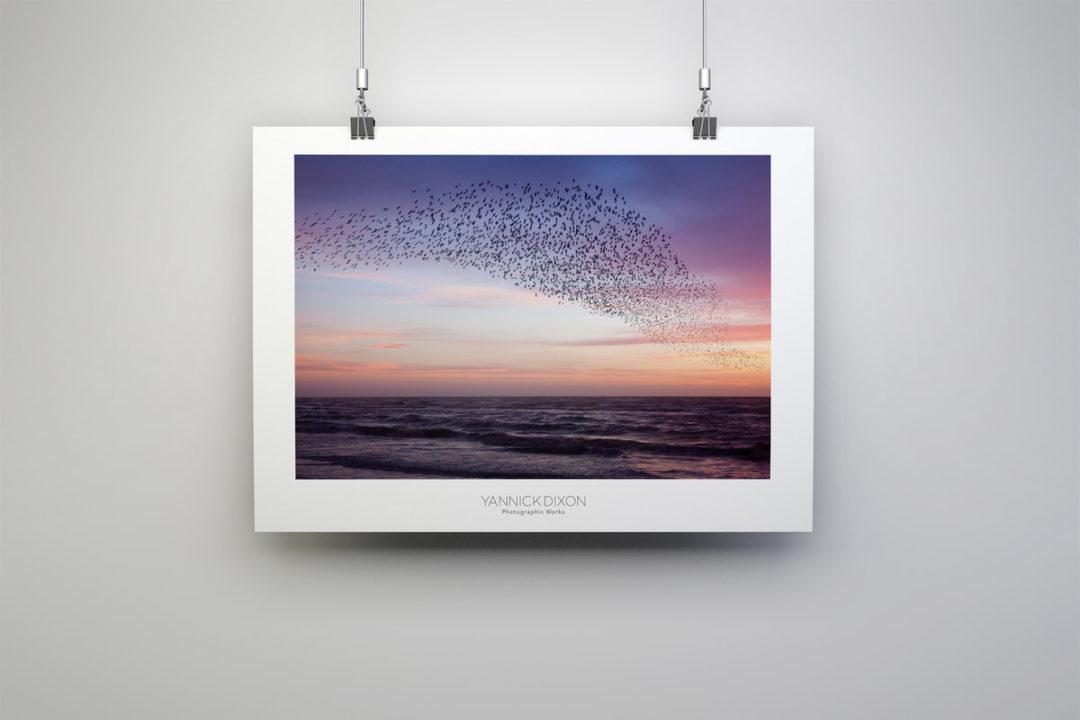 Starlings Purple Sky Print #2 By Yannick Dixon