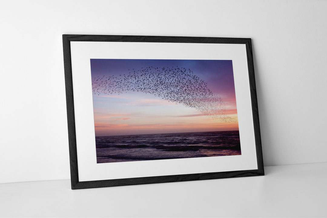 Starlings Purple Sky Print #2 Presented In Black Frame By Yannick Dixon