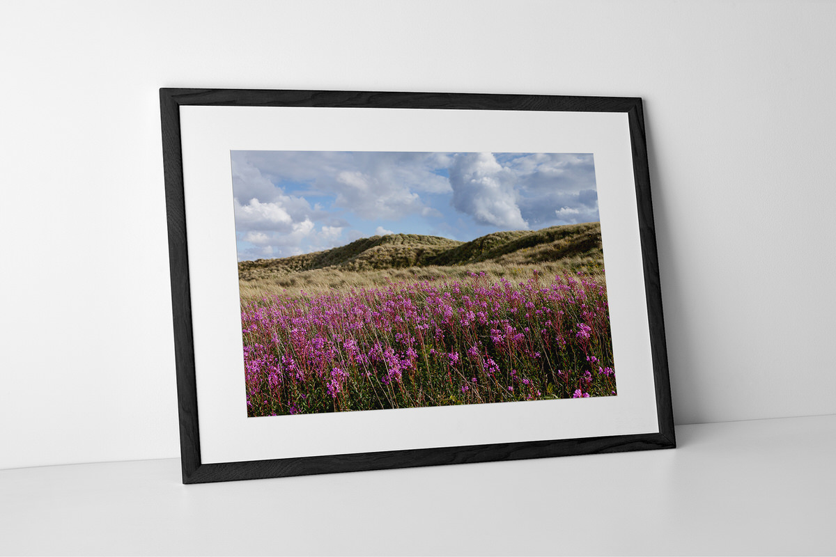 Lytham St Annes Sand Dune Flowers Print In Black Frame By Yannick Dixon