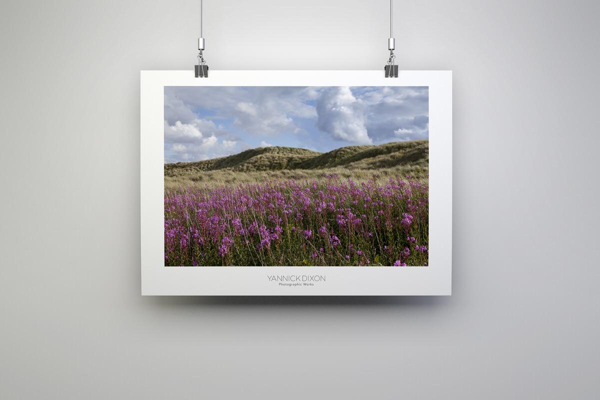 Lytham St Annes Sand Dune Flowers Print By Yannick Dixon