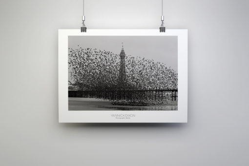 Murmuration of Starlings Photographic Print By Yannick Dixon