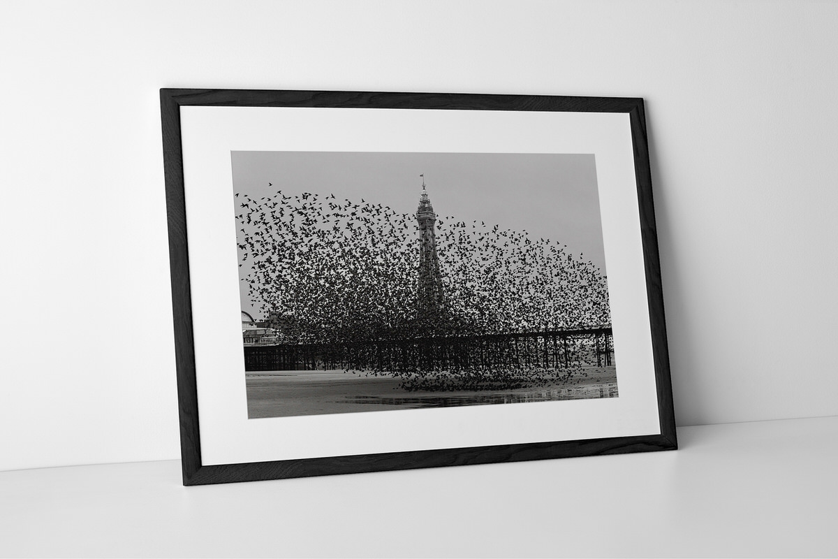 Murmuration of Starlings Photographic Print In Black Frame By Yannick Dixon
