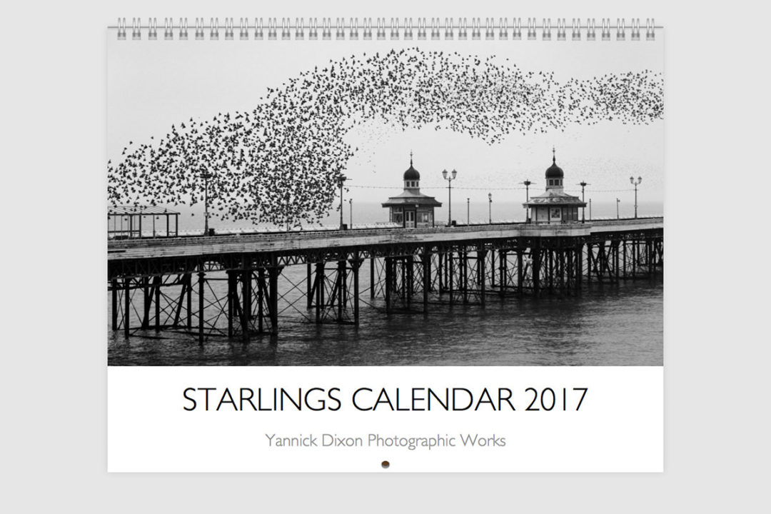 Starlings Calendar 2017 Cover -Bird Photography By Yannick Dixon