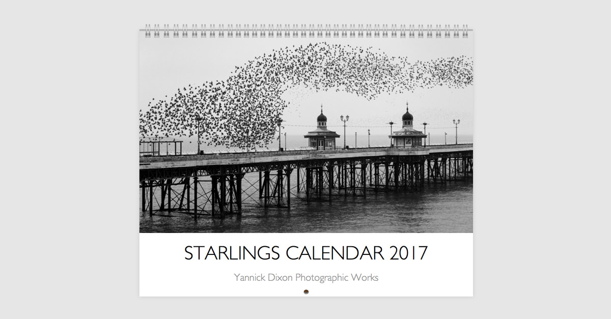 Starlings calendar 2017 yannick dixon photographic works