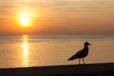 Seagull Silhouette Print