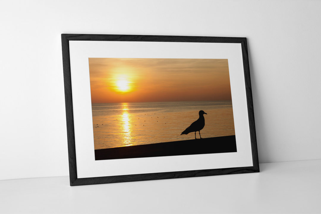 Seagull Silhouette Photographic Print Presented In A Black Frame By Yannick Dixon