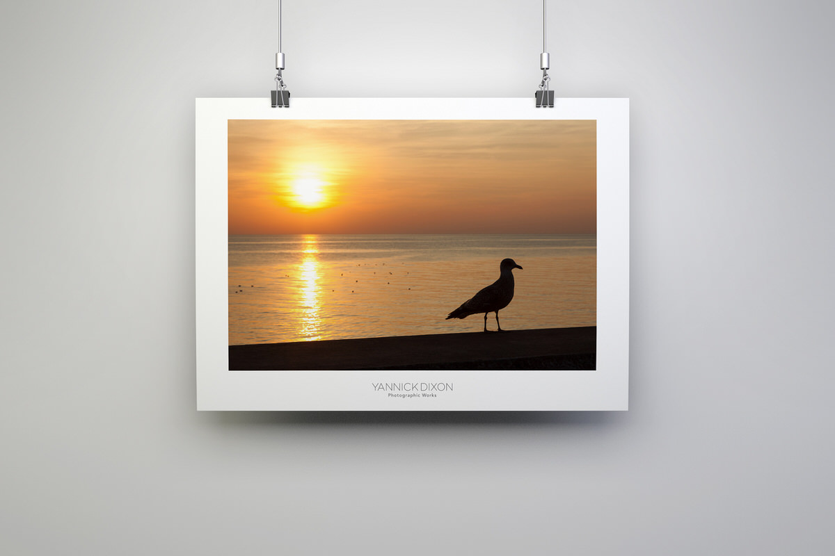 Seagull Silhouette Photographic Print