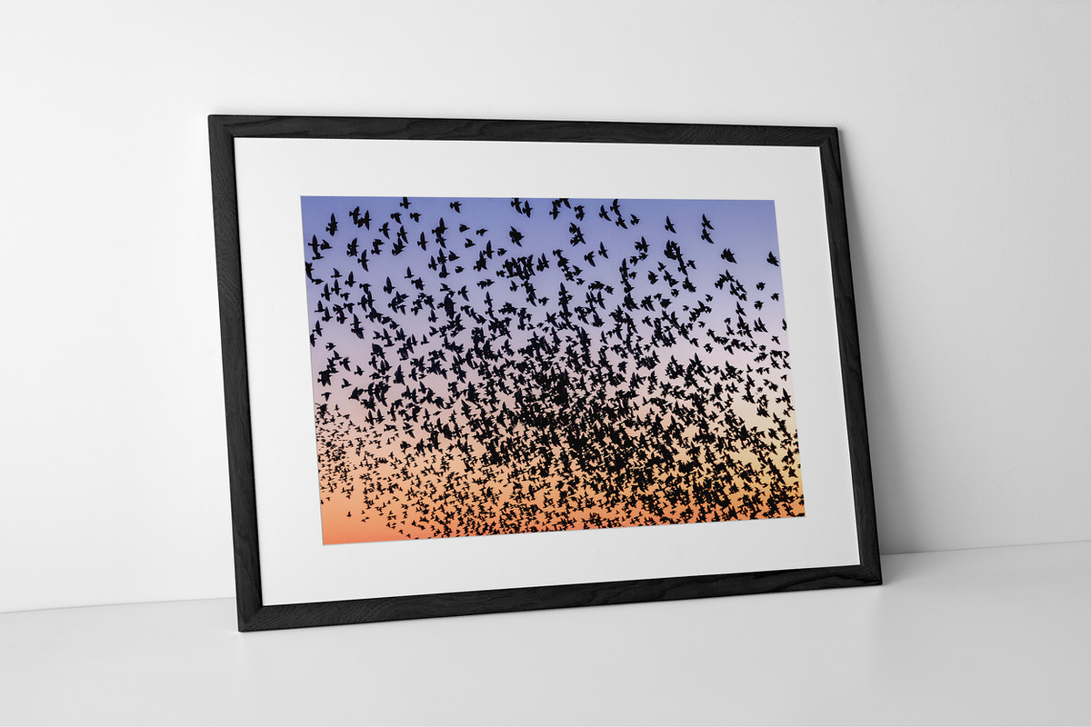 Counting Starlings Photographic Print Presented In A Black Frame By Yannick Dixon