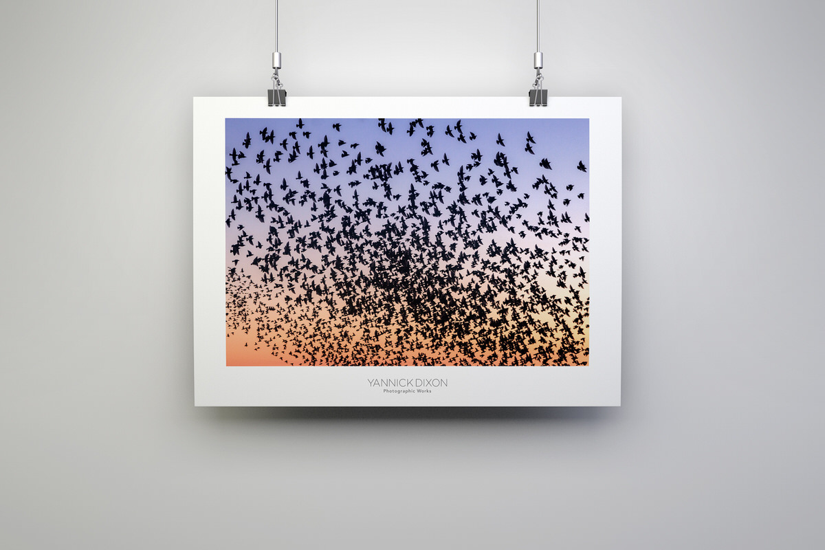 Counting Starlings Photographic Print